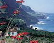 Острова не певчих птичек. Смесь Европы и Африки