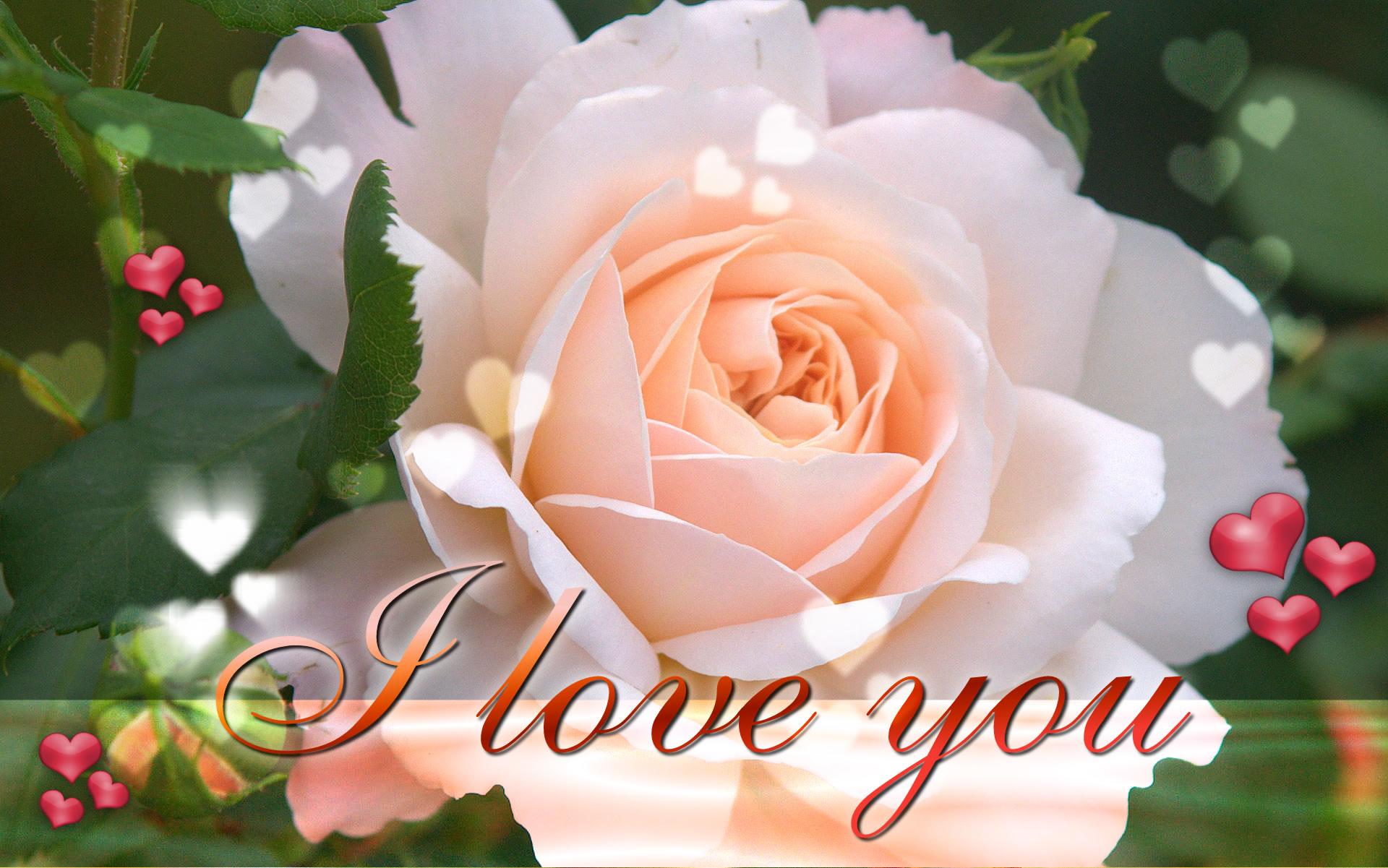 Картинка розы с надписью я люблю тебя