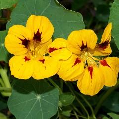 Любимый цветок — изысканная пряность