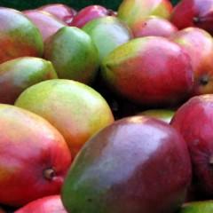 Сорта манго