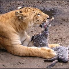 Животные: свой вариант жизнеустройства