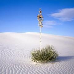 Пустыни могут скоро зазеленеть лесами?