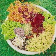 Растения-бутылки — гордость и красота моей коллекции
