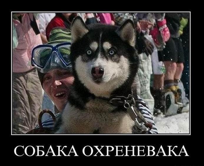 Собака охреневака