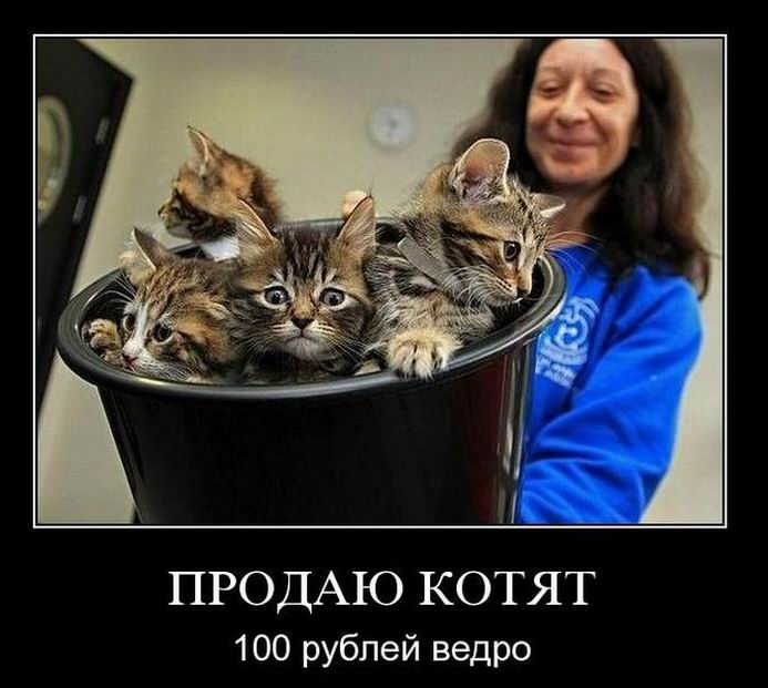Продаю котят. 100 рублей ведро.