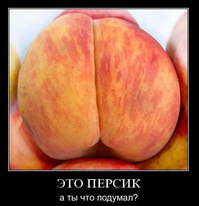 zhopa-persik