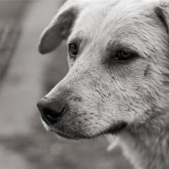Верный пес – повод для знакомства