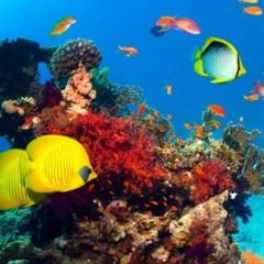 Остров Утопия — коралловый сад