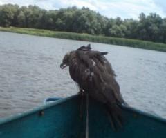 Вместо рыбы поймали птицу